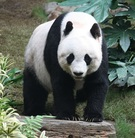 Profile panda1